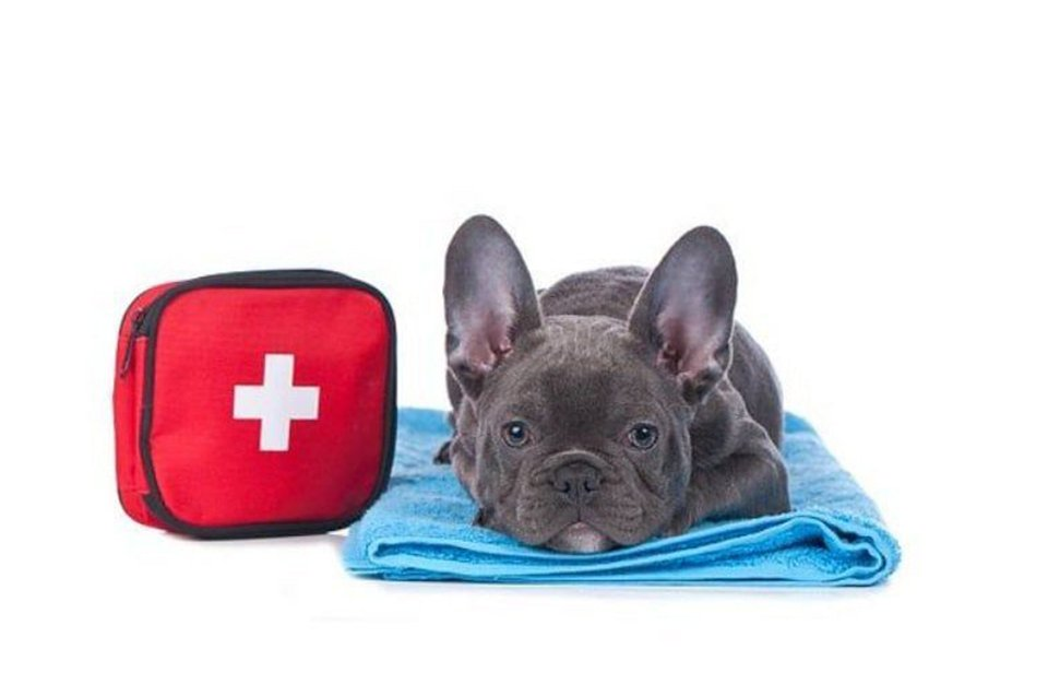 Primo soccorso al cane - Livorno