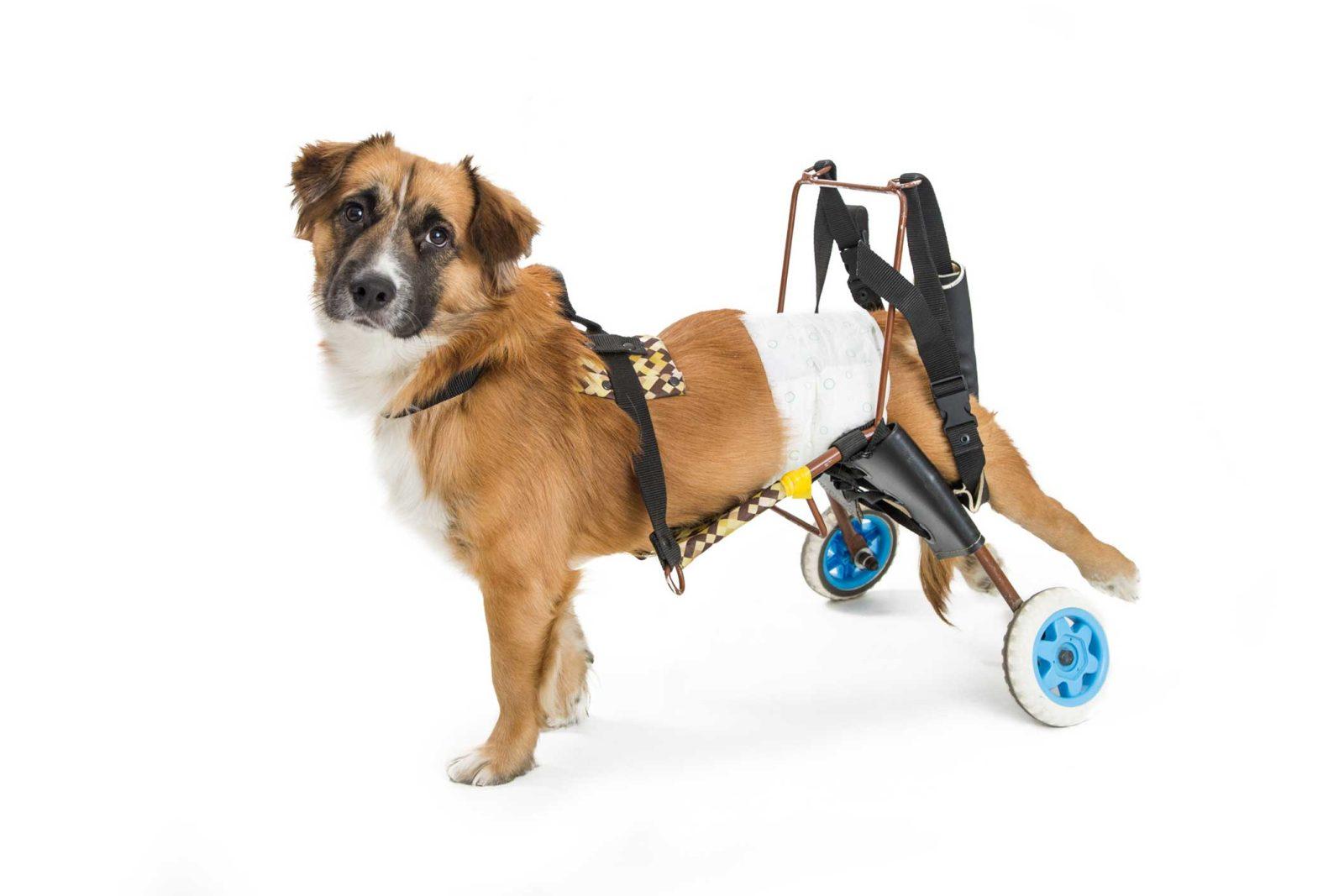 cane con disabilità
