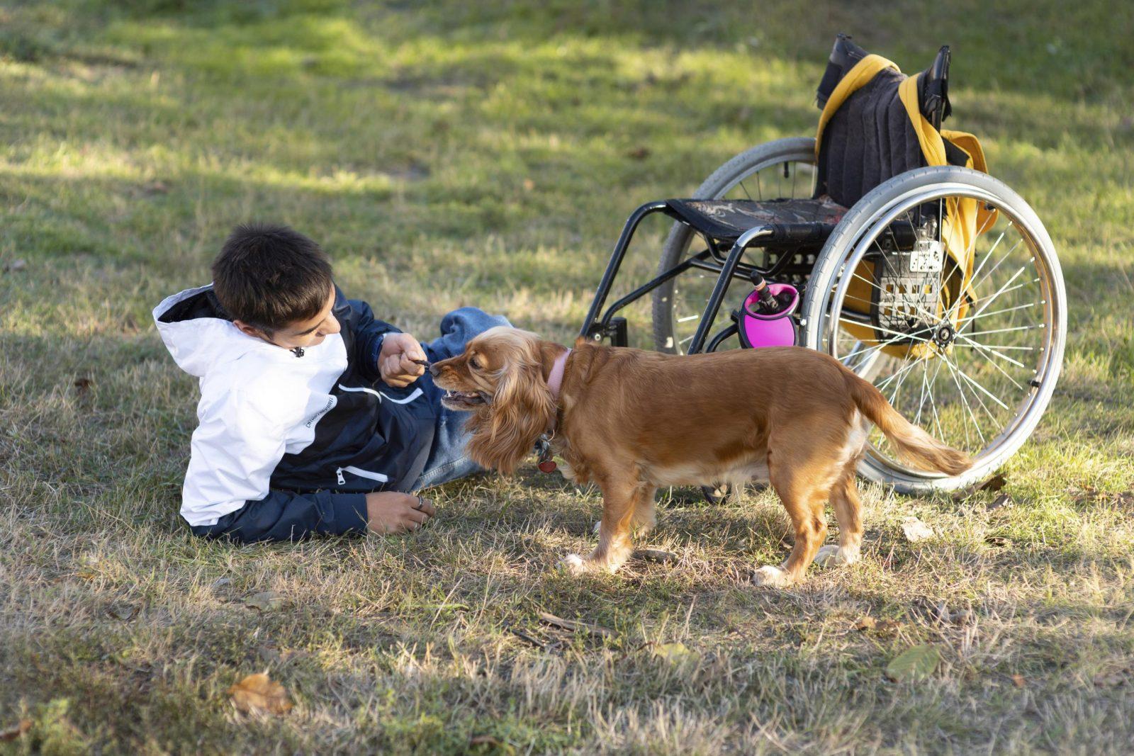Corso per Istruttore Tecnico Cinofilo in Cani d'assistenza per disabili motori